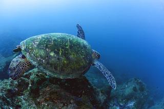 赤水 ウミガメ.jpg